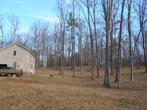 A photo of part of our backyard shortly after we bought our home--it was full of trees. Most of these trees would turn out to be dead.